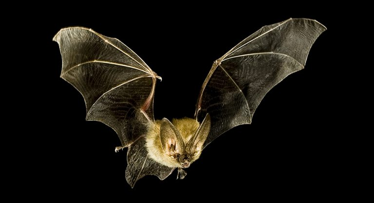 Djur på Lidingö: Nio olika fladdermöss på Lidingö