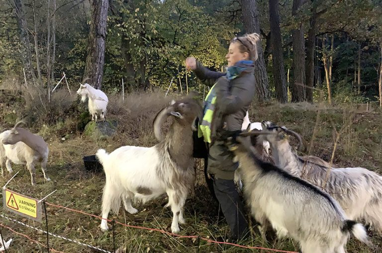 After Goat vid Vattenverket