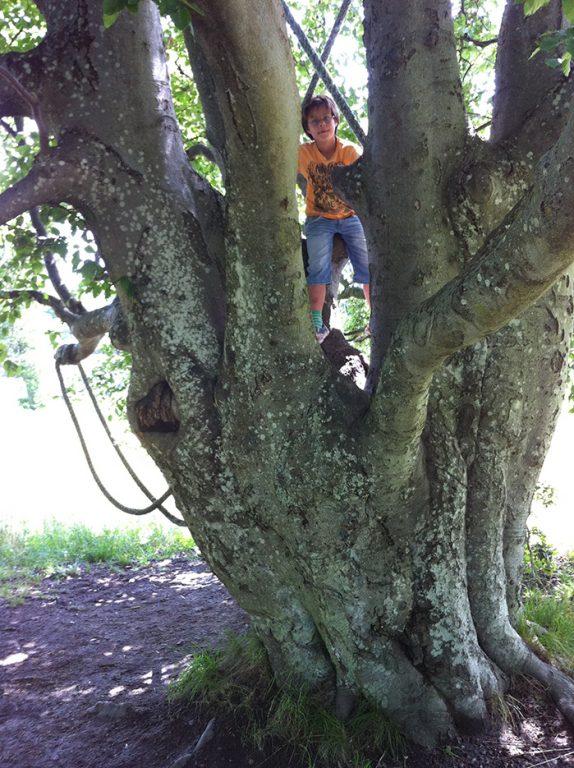 Koll på fotografen från klätterträdet i Hustegaholm