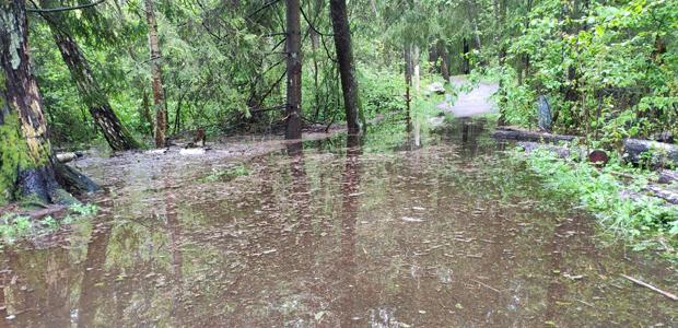 Det stora regnet är bra för öns natur