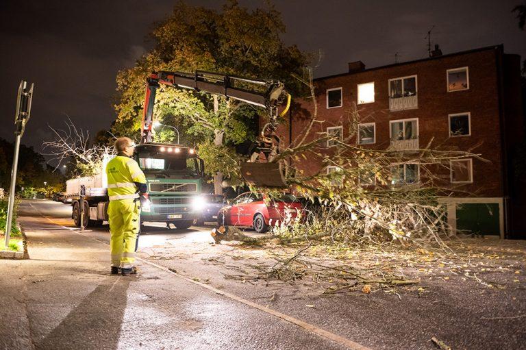Träd blåste omkull i Baggeby